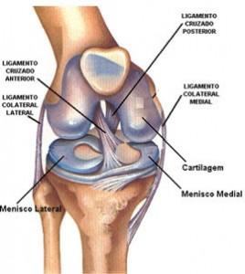 ligamento-do-joelho